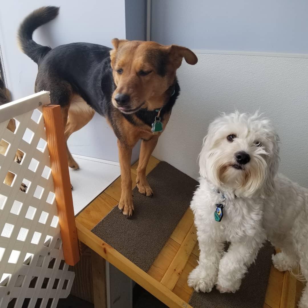 Bloomfield, NJ Dog Daycare