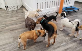 Dog Daycare in Bloomfield NJ