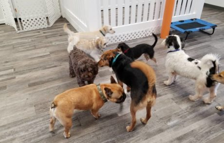Dog Daycare in Bloomfield NJ
