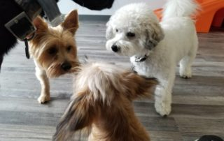 Dog Daycare in NJ