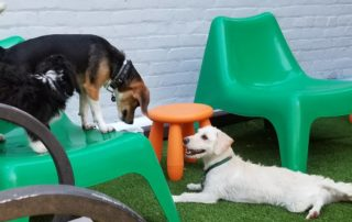 Dog Daycare in New Jersey