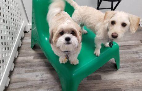 Dog Daycare in NJ Overnight Boarding