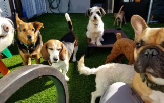 Overnight Boarding Dog Daycare NJ