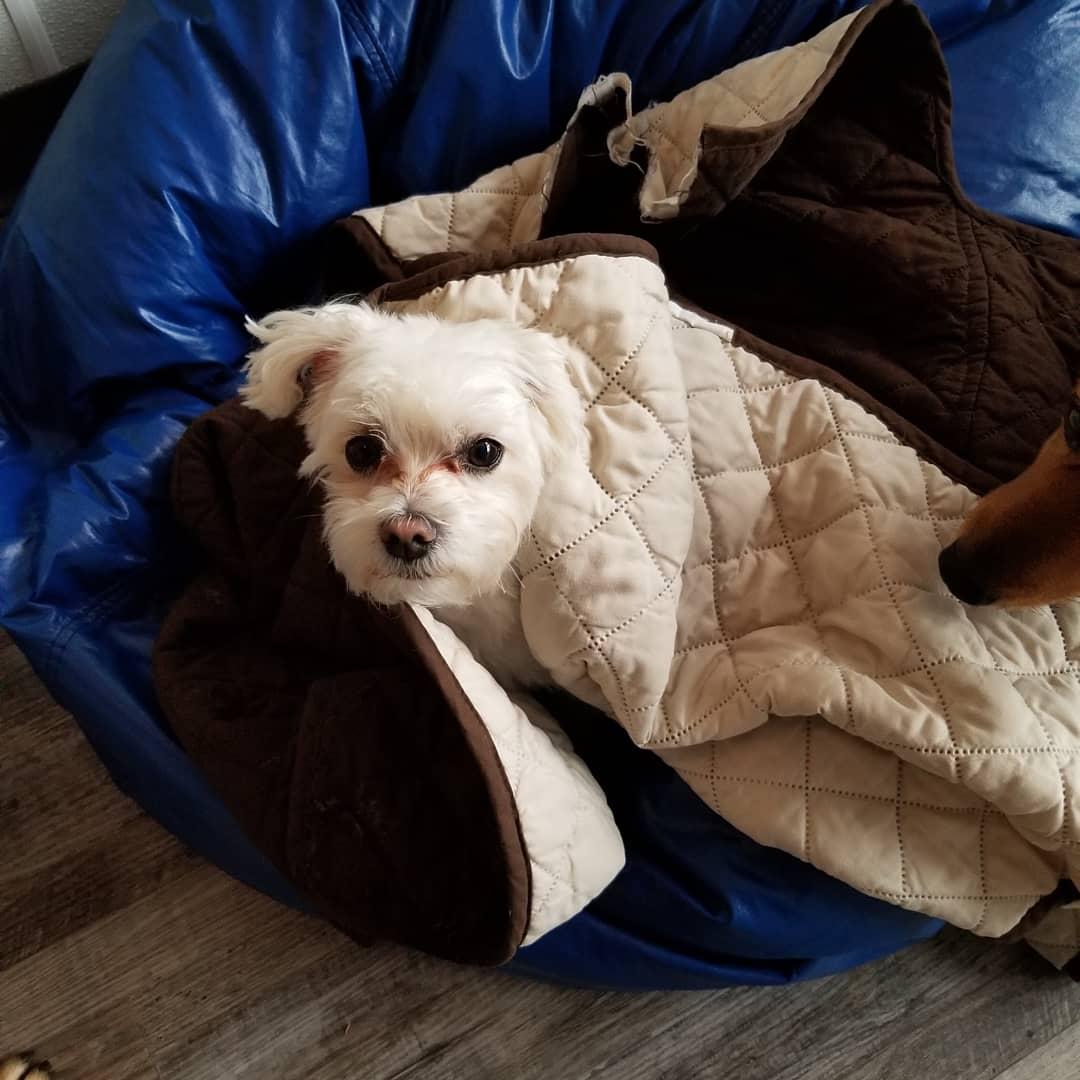 New Jersey Dog Daycare