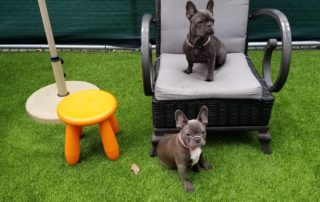 NJ Outdoor Dog Daycare