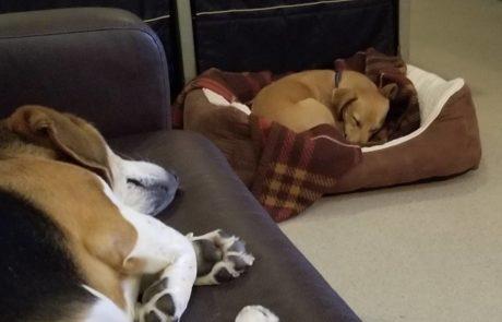 NJ Dog daycare