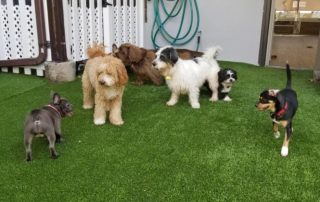 Outdoor Dog Daycare NJ Bloomfield