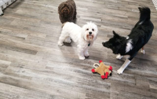 Small Dog Daycare in Bloomfield New Jersey